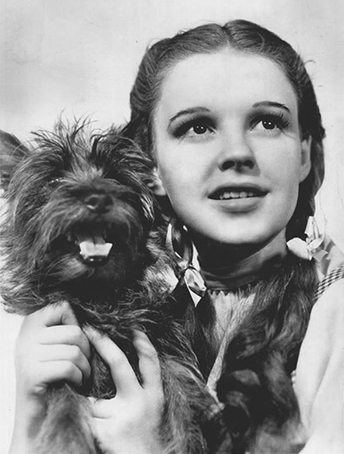Click image for larger version.  Name:2.4.3. 12 19 4Terry as Toto with Judy Garland in The Wizard of Oz.jpg Views:41 Size:79.8 KB ID:3667389