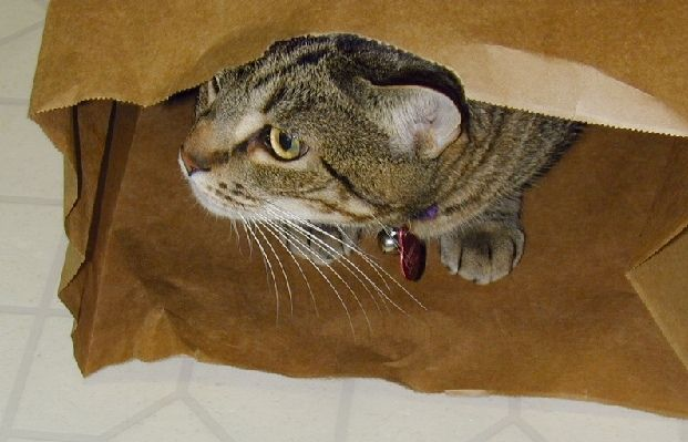 Click image for larger version.  Name:Hobbes in a bag to post.jpg Views:7 Size:43.4 KB ID:512541