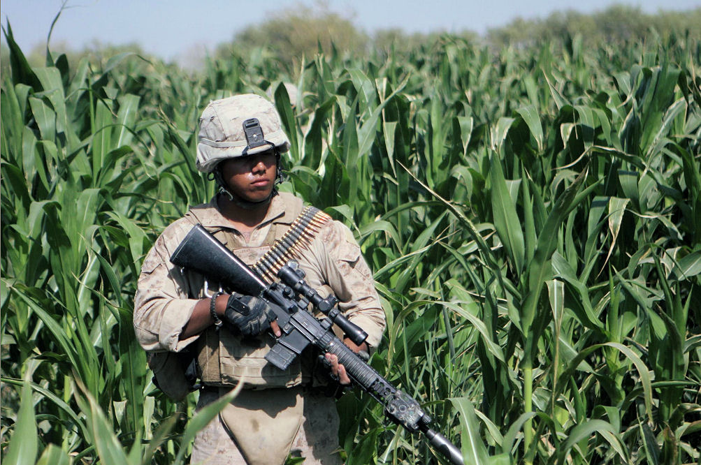 Click image for larger version.  Name:MK12 In The Corn.jpg Views:35 Size:210.2 KB ID:449058